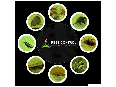 Pest Control West Beach