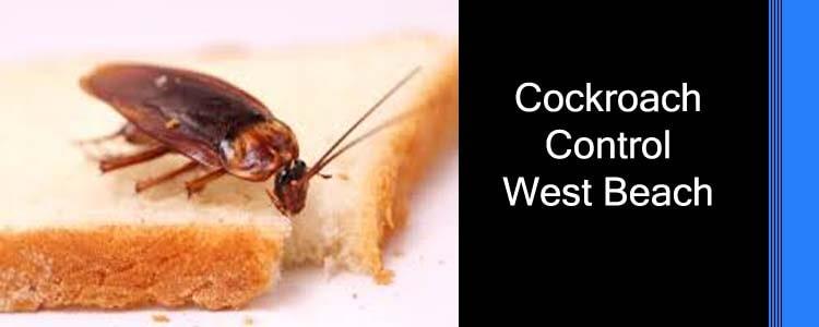 Cockroach Control West Beach