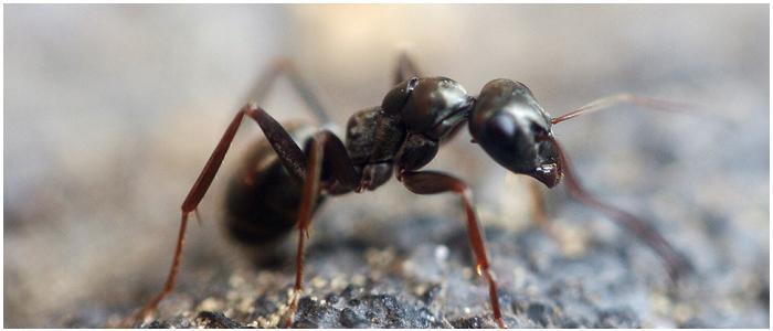 Ant Control West Beach